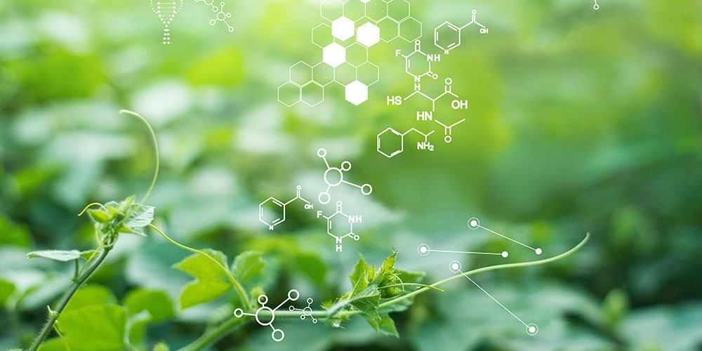 AIT-STEIN: second contract in the biorefinery sector